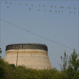 Swallows in Chernobyl