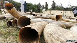 Kenya Wildlife Service (KWS) officers stand guard near a shipment of elephant tusks and rhino horns which was intercepted at Jomo Kenyatta International Airport, in the capital Nairobi August 23, 2010