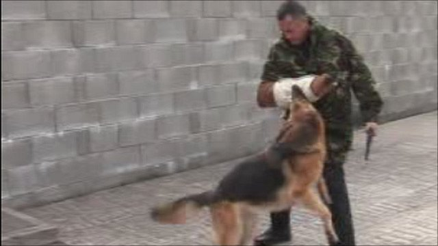 Police dog in action