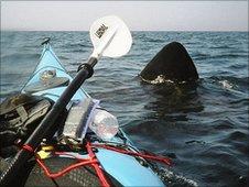 A basking shark within touching distance of Craig's kayak