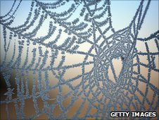 Spider's web covered in frost