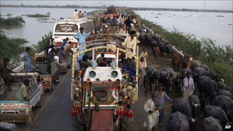 Pakistani villagers flee their homes with their livestock after flooding in Thatta near Hyderabad, Pakistan - 26 August 2010