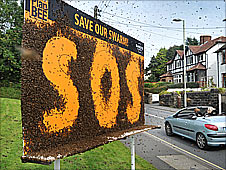 The bees billboard