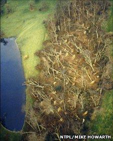 15 million trees were lost