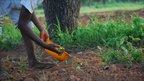 Making shea butter in Zoosali, Ghana, a photo gallery by Ruth Leavett, Gaia Foundation