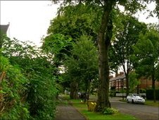 Trees in Hull's Avenues area