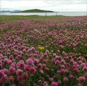 Habitat on a Hebridean island (Image: BCT)