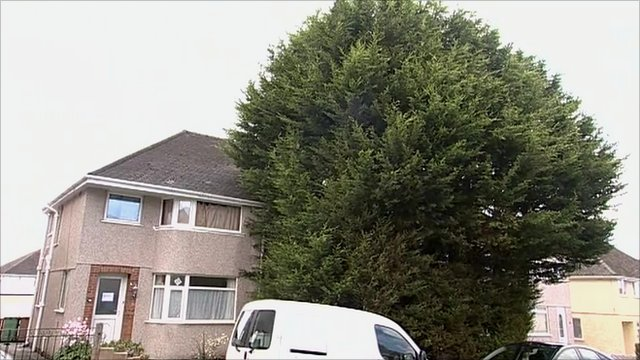 Large Leylandii tree in front of house