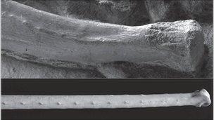 Fossil and modern bones (Ortega/Sanz)