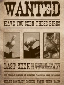 Appeal for missing Weston ornamental birds - BBC News