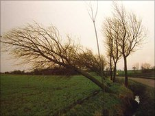 Photo taken a few days after the storm on the Stebbing to Great Bardfield in 1987.