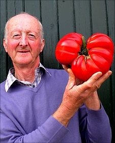 Peter Glazebrook holds up a giant tomato