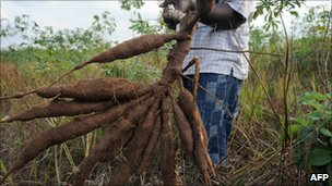 Farmer with cassava, file image