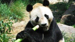 Kou Kou the panda at Oji Zoo, June 2010