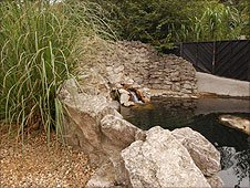 The seal enclosure at Colchester Zoo