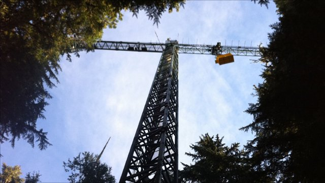 Crane above Gifford Pinchot National Forest, USA