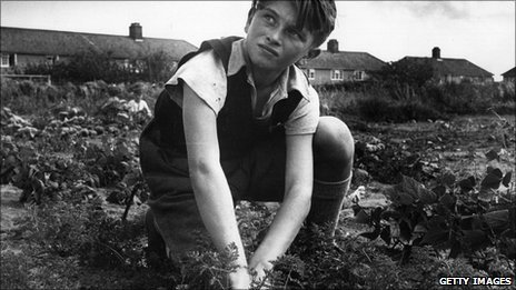 Boy on allotment
