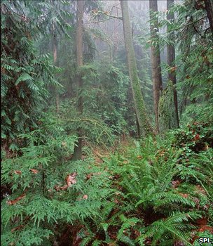 File image of a temperate rainforest (Image: Science Photo Library)