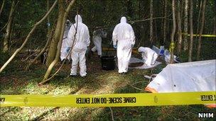 Woodland crime scene