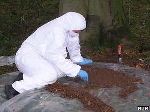 Taking insect samples from a crime scene