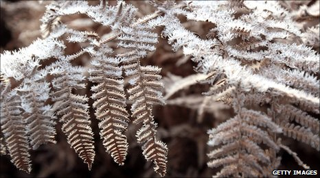 Plant is covered in the early morning frost