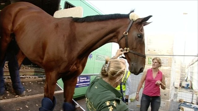 Horse on its way to World Equestrian Games