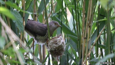 ...на свет немного раньше птенцов хозяйки гнезда.
