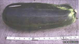 Courgette used by woman to repel bear
