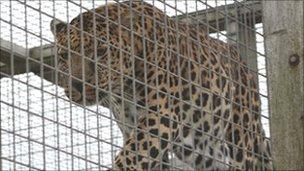 A leopard at Both Animalarium