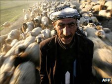 Kurdish shepherd, Van