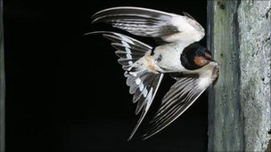 Climate risks greater for long distance migratory birds