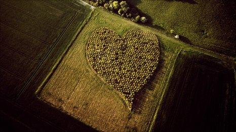 Heart Wood, Oare, Wiltshire