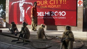 Langur monkeys outside the hockey stadium in Delhi on 28 September 2010