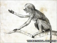 A sketch of a monkey taken from journals written by Royal Navy surgeons between 1793 and 1880