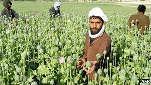Afghan villagers tending to opium poppies in Helmand province, southern Afghanistan, file pic from 2007