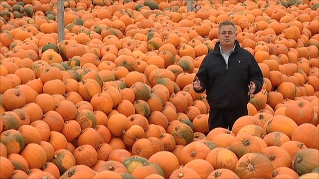 Mike Liggins among the pumpkins
