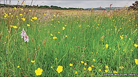 Knowstone Inner Moor