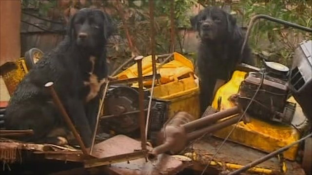 Dogs sit on pile of rubble