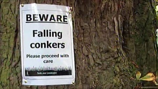 Conkers warning sign
