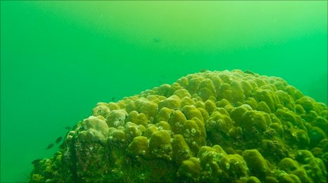A coral reef under a toxic algae bloom