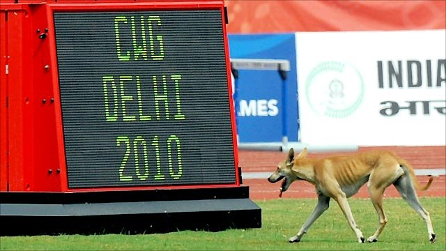 Dog at the Jawaharlal Nehru Stadium in Delhi