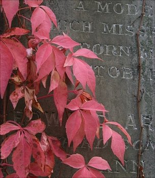 Vine growing on a headstone (Image: BBC)