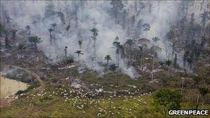 Forest clearance in Brazil (2008)