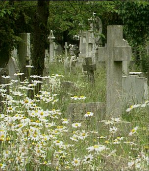Wildflowers in a cemetery (Image: BBC)