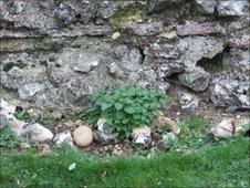 Roman wall in St Albans