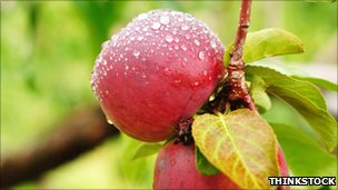 Apple with dewdrops