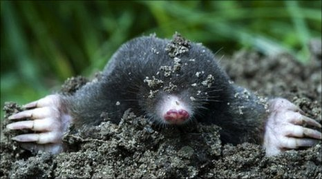 how to get rid of mole holes