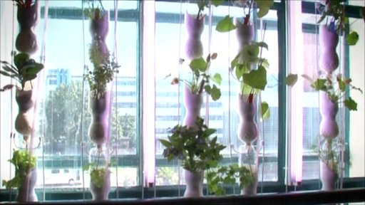 A window farm