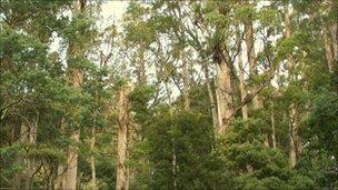 據估計,在過去25年裡,上萬公頃的林地已經砍伐殆盡。圖片來自:BBC報導。