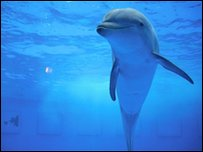 A dolphin at Barcelona Zoo, taken by Anna, 11.